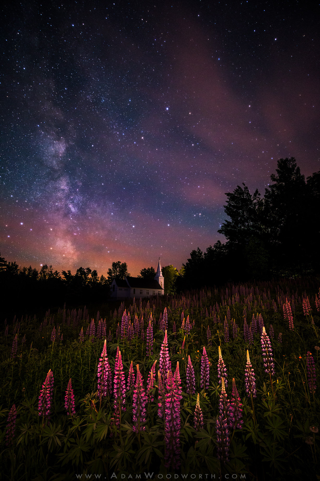 Lupines and the Milky Way